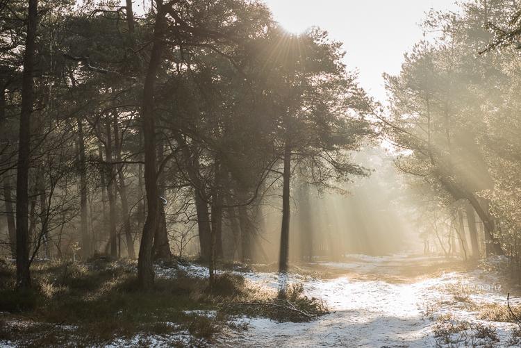 lichtstralen die gebroken worden zorgen voor de magie in het bos
