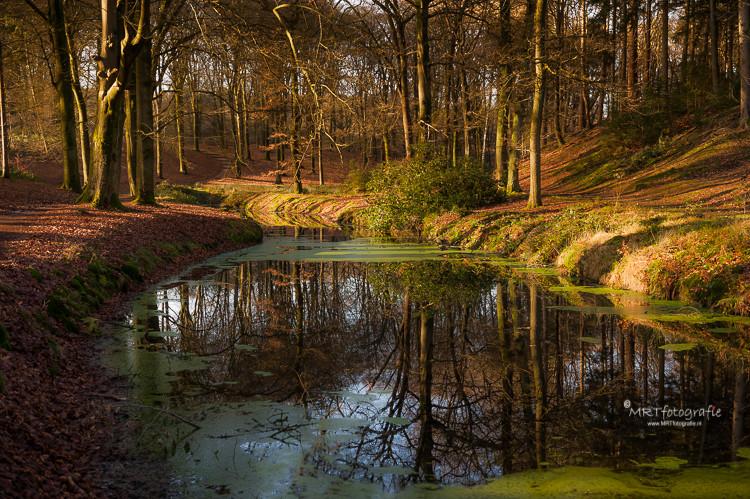 Reflecties van de bomen in het water Veluwezoom