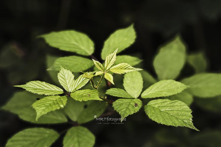 Een half open diafragma ( f/7.1 in deze foto) maakt dat onder de scherpe bladeren bovenin, de onderliggende bladeren nog goed zichtbaar zijn.