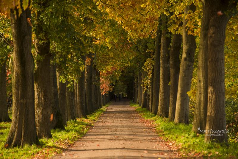 Ogenschijnlijk symmetrisch Rij bomen in herfsttooi