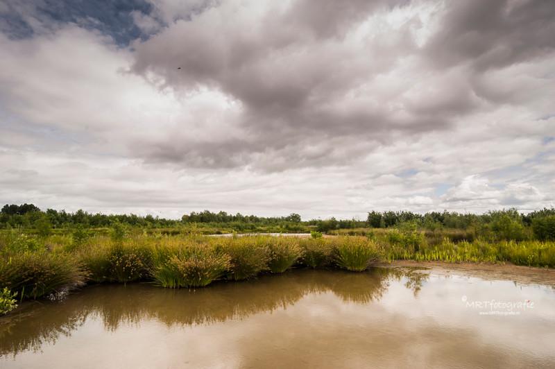 Fluitekruid, Natuurgebied De Schammer, te Leusden