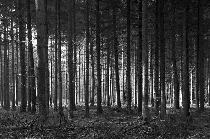Dit hout is puur voor de productie. De bomen staan dan ook keurig gerangschikt. De stammen vormen de verticale lijnen, de begroeide takken zorgen voor een diagonale lijn. Sluitertijd 1/60, diafragma f/7.1, ISO 250