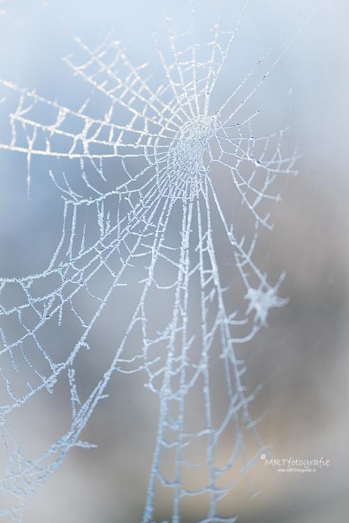 Spinnenweb bedekt met ijzel en sneeuw