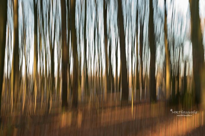 Creatieve fotografie. Bewegende bomen. Sluitertijd 1 sec.