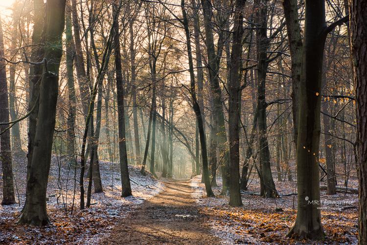 Op deze plek is ruimte, de bomen staan niet al te dicht bij elkaar.                                                                                        Het pad leidt het oog door de foto en zorgt voor diepte. Sluitertijd 1/125 sec., F/11, ISO 400