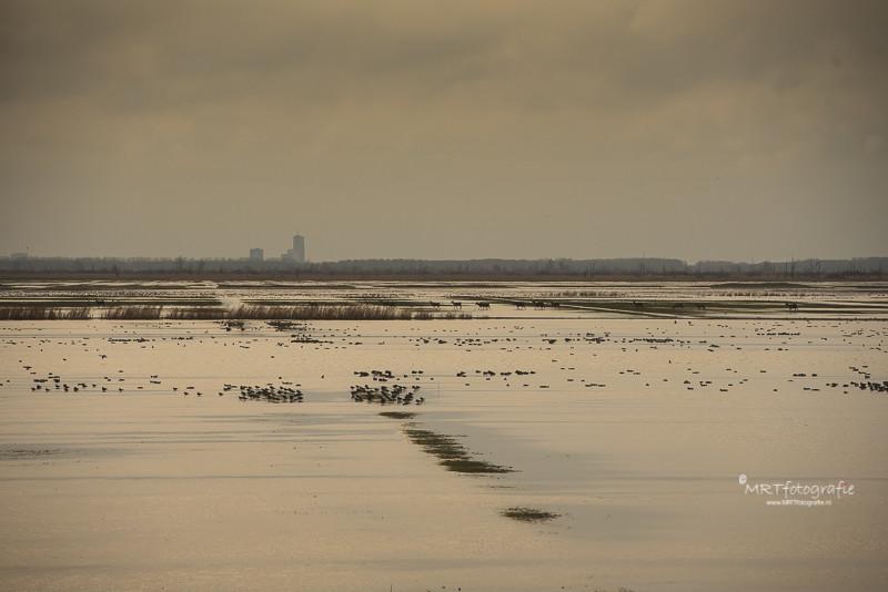 Aan de horizon van de Oostvaarders Plassen waden de edelherten door het ondergelopen grasland
