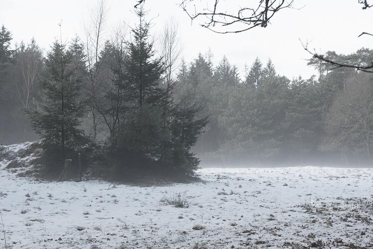 Opzetten van de mist in de Leuvenumse bossen