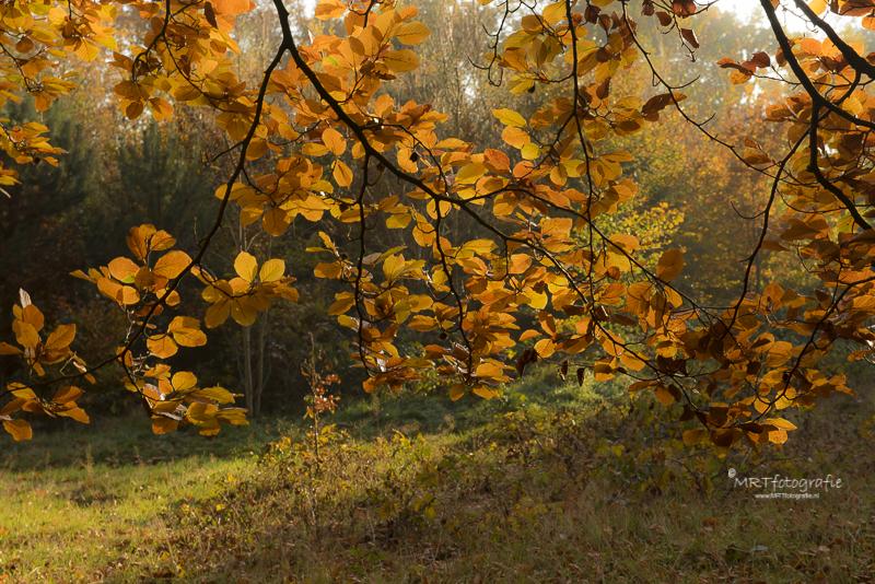 Fraai gekleurd blad aan Herfsttakken