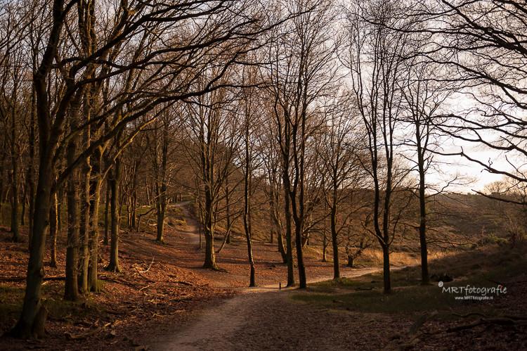 Het pad terug van de Posbank naar de Veluwezoom