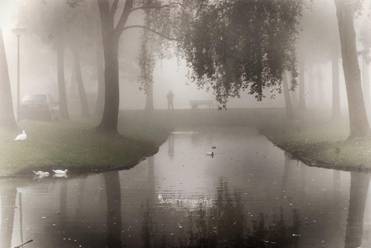 Slootje met muskus eenden en mist in Leusden