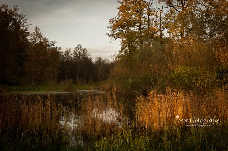 Laatste zon zet in de herfst het riet in het water in een gouden gloed