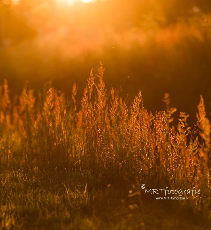 Ondergaande zon, De Schammer, leusden