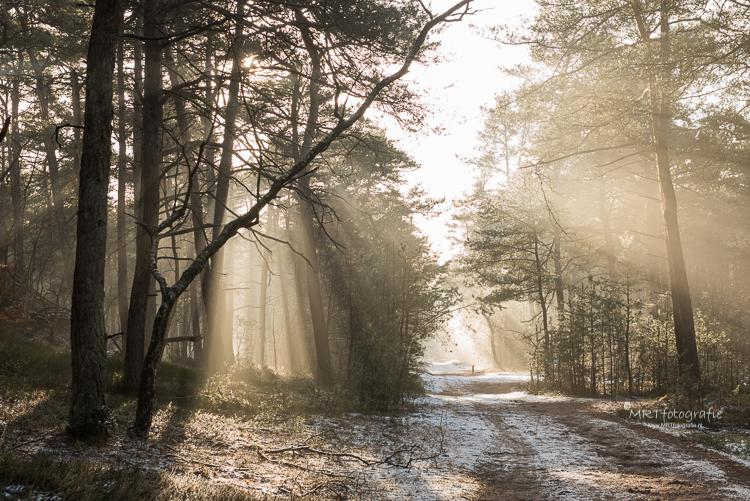 Magisch Leuvenumse Bos. Zonneharpen in de winter