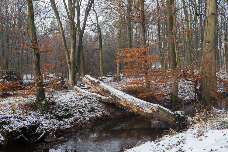 Winer In het Leuvenumse Bos