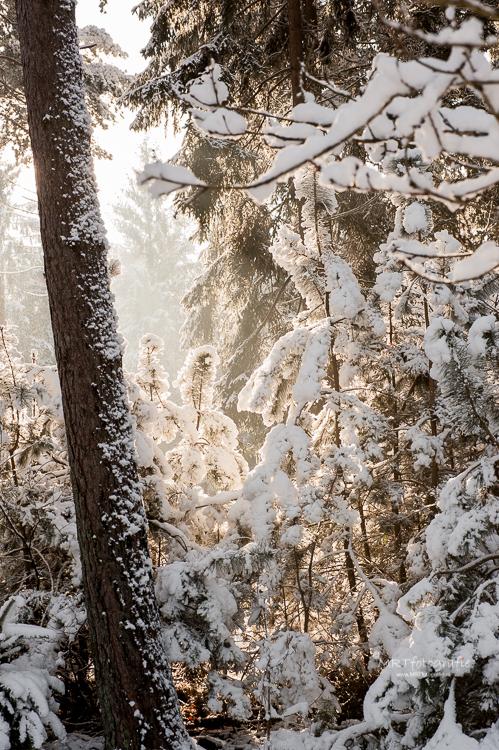 Natuur in de sneeuw met wat mist.