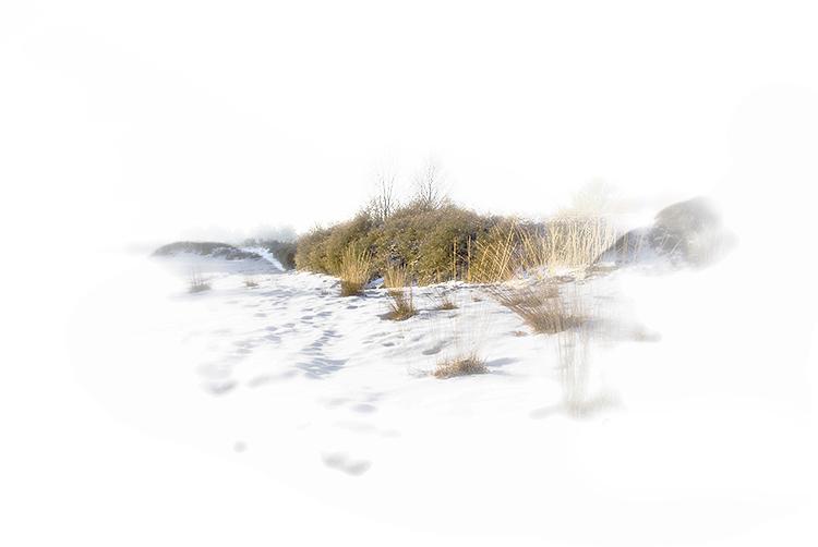 Een sneeuwlandschap is heel geschikt voor high-key fotografie. In de nabewerking heb ik de struiken en het gras iets meer verzadigd en van contrast voorzien en een witte vignettering