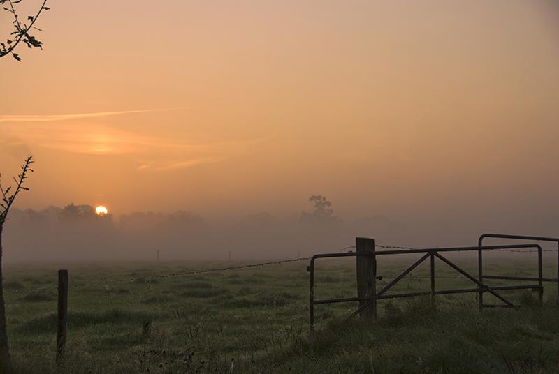 Hek bij opkomende zon en mist