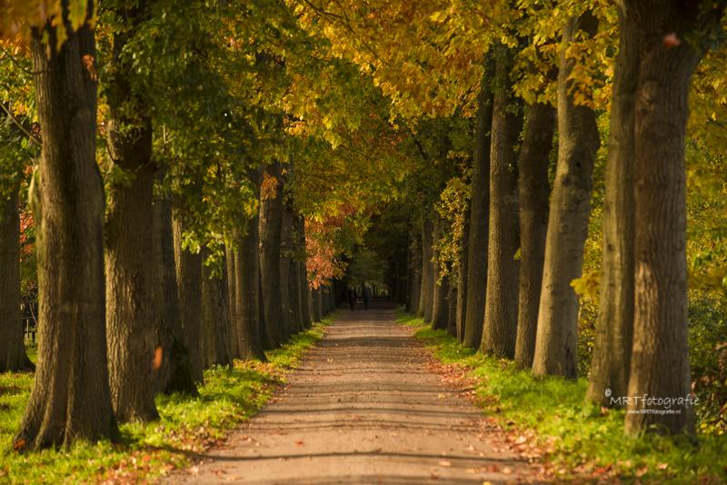 Laan tussen twee bomenrijen in herfsttooi