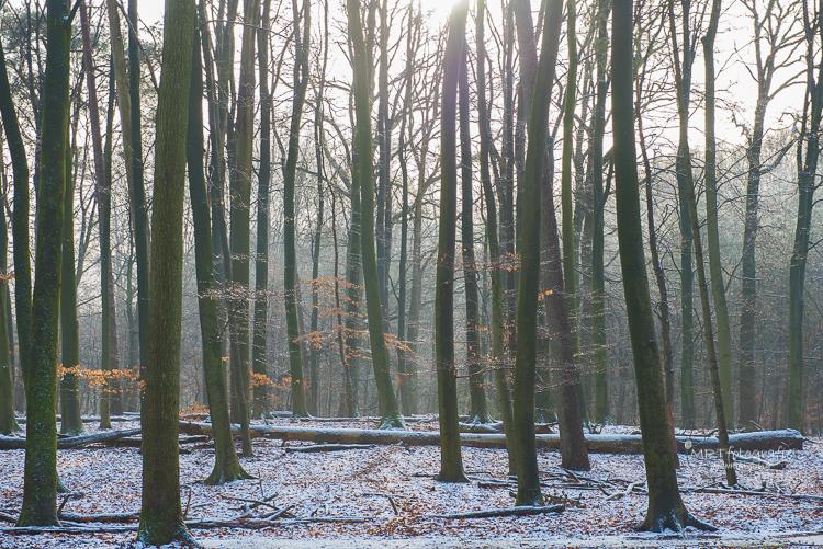 Zicht door de mooie loofbomen in het Leuvenumse Bos