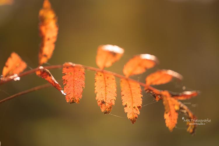 Om de nadruk op 1 of 2 bladeren te leggen en de achtergrond te vervagen kies je voor eenopen diafragma. Hier f/4.5