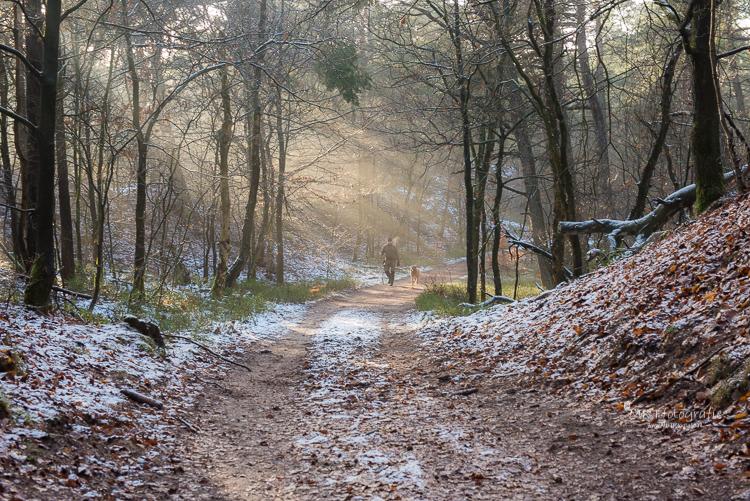 Zonnestralen in het Leuvenumse Bos door combinatie van mist en zon