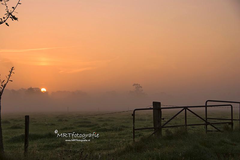 hek bij weiland met opkomende zon en mist