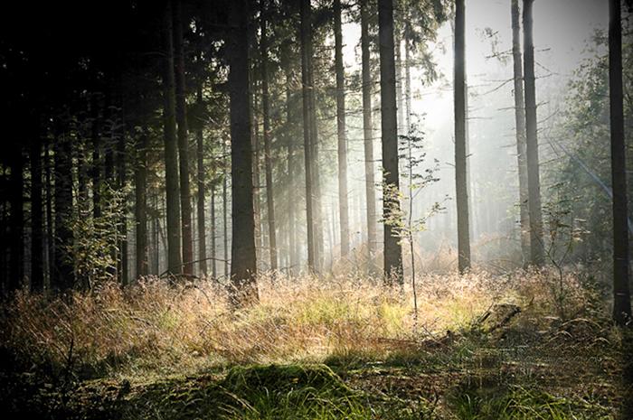 Een koude ochtend met zon en mist zorgt voor een prachtige lichtval op de grassen onder de bomen. Sluitertijd 1/80, diafragma f/ 5.6, ISO 200