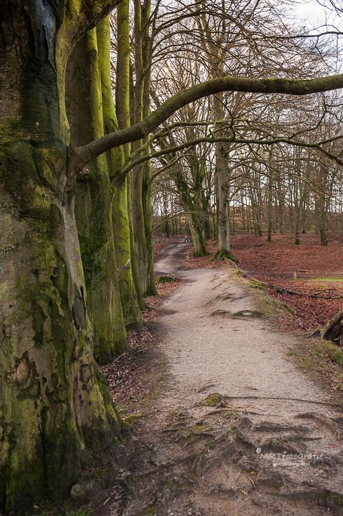 Doorwortelde voetpaden Veluwezoom