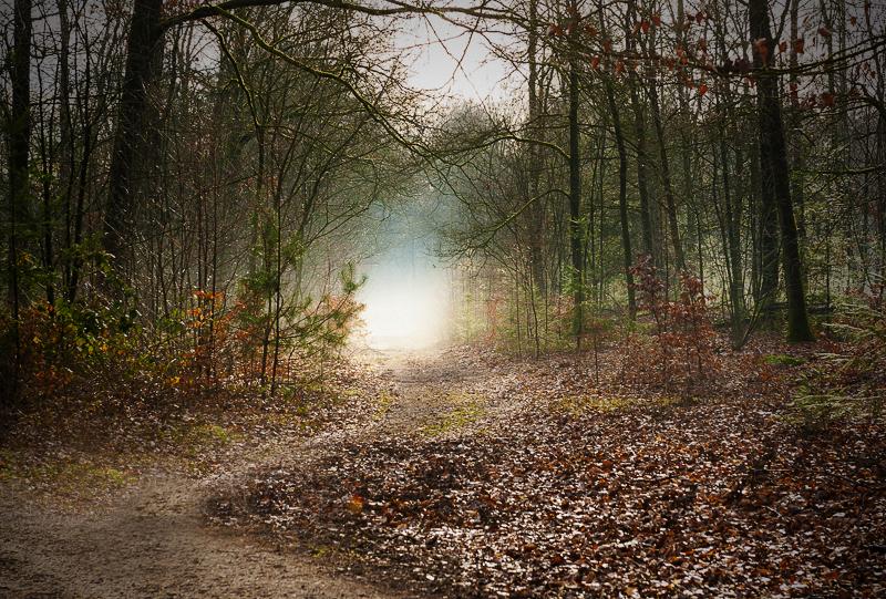 Mist in het bos. Den Treek, Leusden