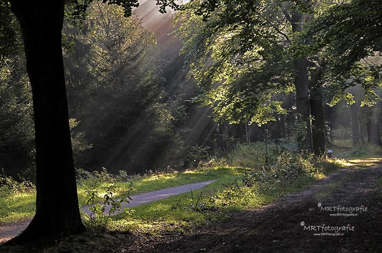 Den Treek/ Leusden, zonneharp