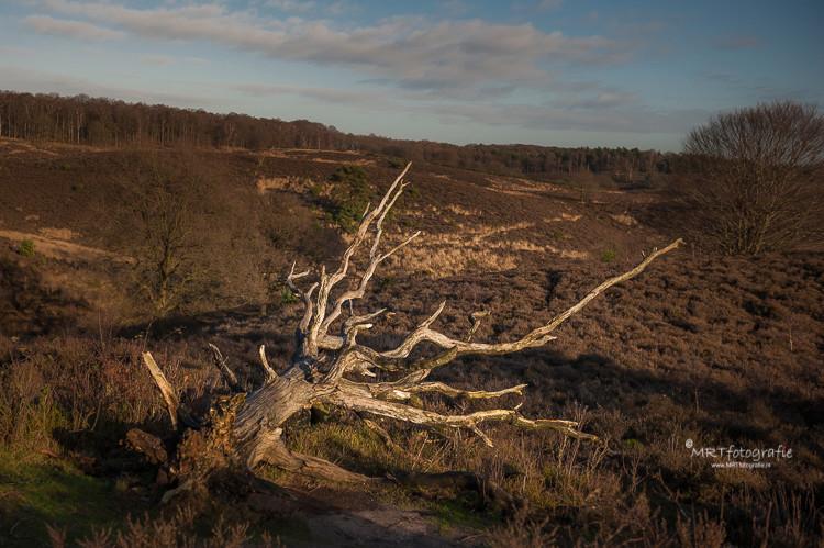 Dode bomen blijven liggen