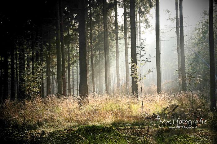 De zon komt door de mist in het bos