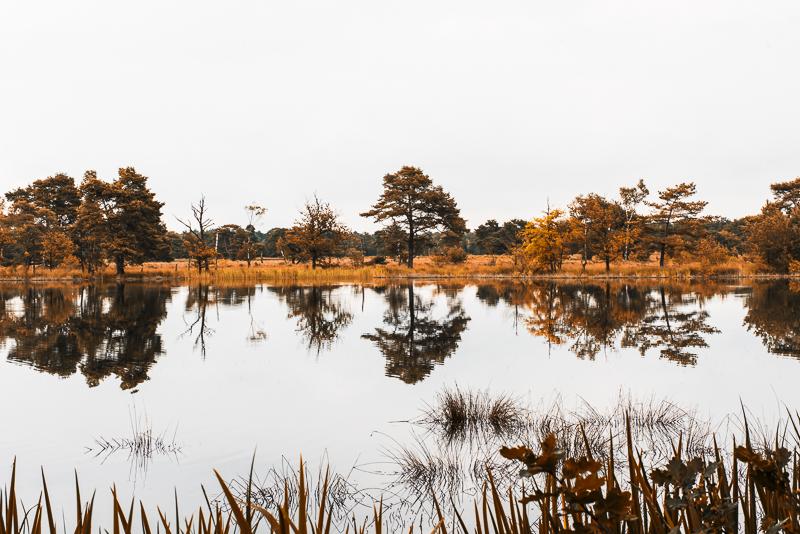 Symmetrie door reflectie in het water. Leersumse Plassen