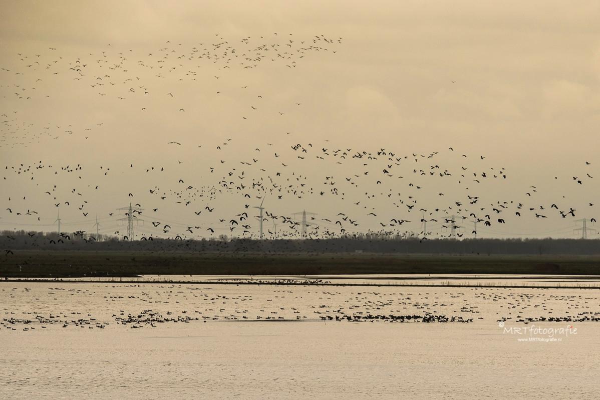 Honderden vogels