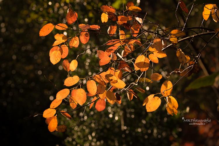 Is het juist de bedoeling om alle bladeren scherp in beeld te brengen, kies je voor een klein diafragma ( hoog getal) In dit geval f/11
