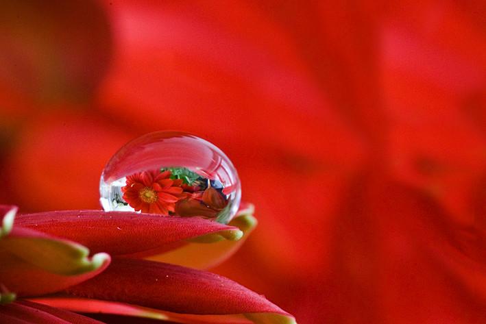 Kleine Scherptediepte druppel met reflectie van bloem erin