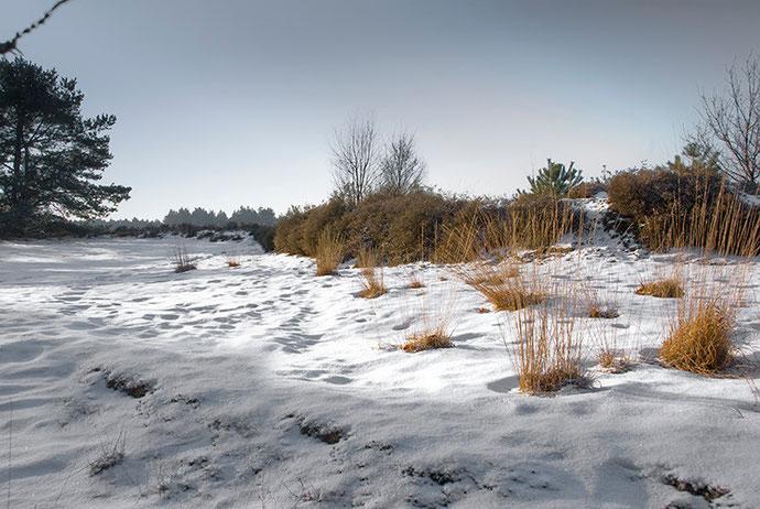 Sneeuw met gras in Den Treek, Leusden