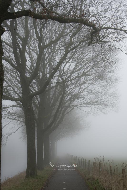 Een dichte compacte mist maakt een kleine wereld. Sluitertijd 1/60 sec., diafragma f/4, ISO 400