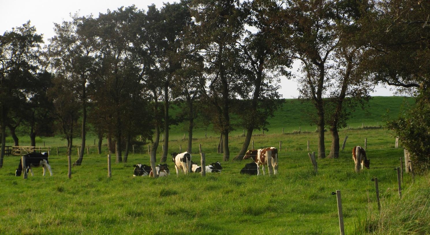 Landleben direkt hinter dem Deich
