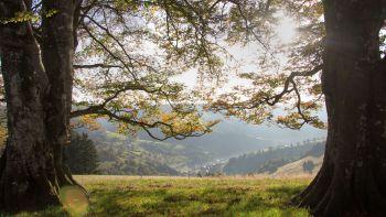 Naturlandschaft ohne Funk beim Hotel ohne Funk- und Strahlenbelastung