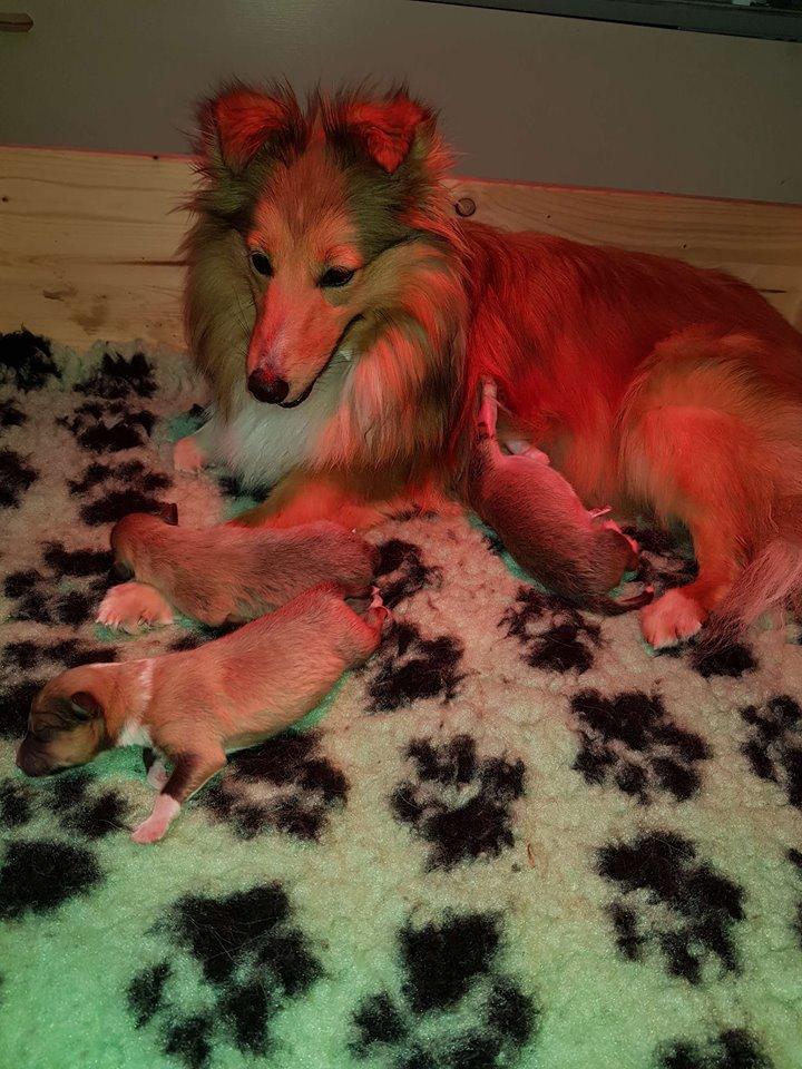 Sam mit ihren Babys