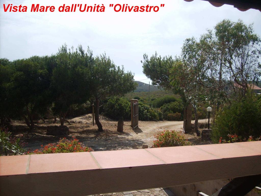 """Vista mare """"Olivastro"""""""