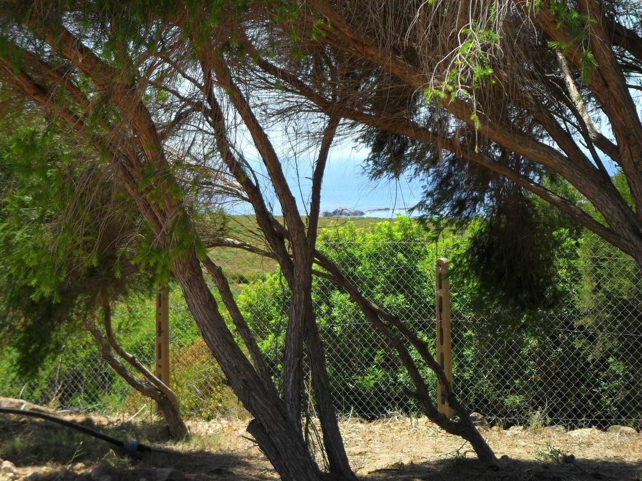 Vista su Cala Sapone