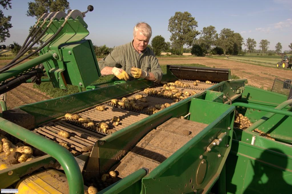 Ulrich Püllen sortiert Steine, Erde und schlechte Kartoffeln bereits auf dem Feld aus