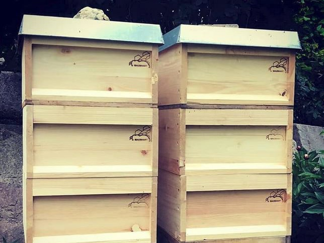 Bienenkisten bzw. Bienenbeuten mit Brandstempel Branding