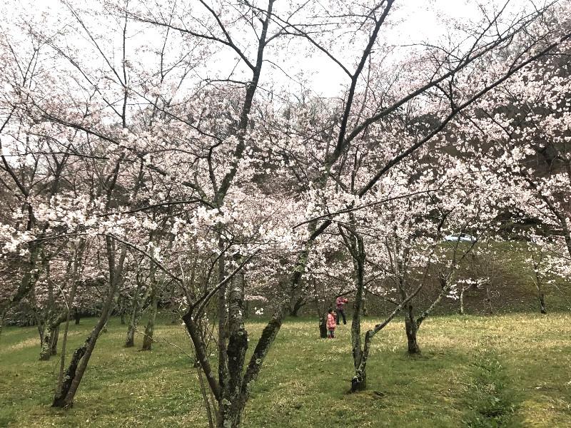 卯辰山400年の森 ① 食事会のお店に向かう途中寄り道しました☆
