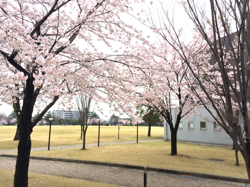 金沢市民芸術村 天気が良ければここでお花見する予定でしたが…><(泣)