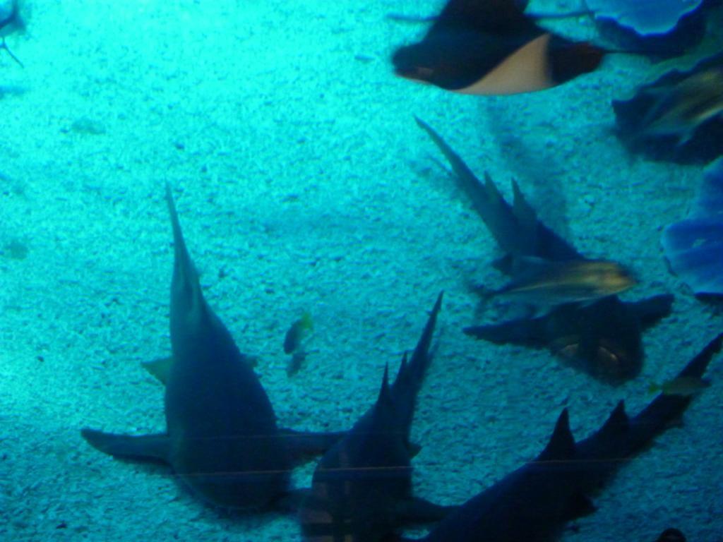Riesige Aquarien