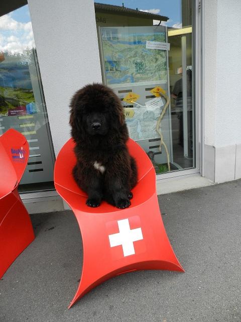 Bin eine stolze Schweizerin