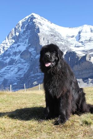Eiger (Raja) 2015